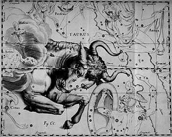 Taurus Constellation, by Hevelius.